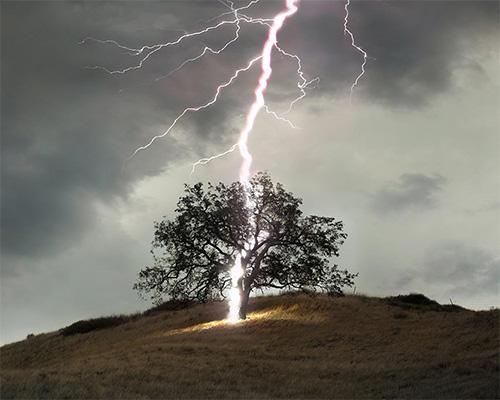 LIGHTNING-TREE-B-500x400